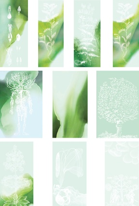 The glass panel graphics mirror and recall the botanical history of collection and recording, drawing and examining.