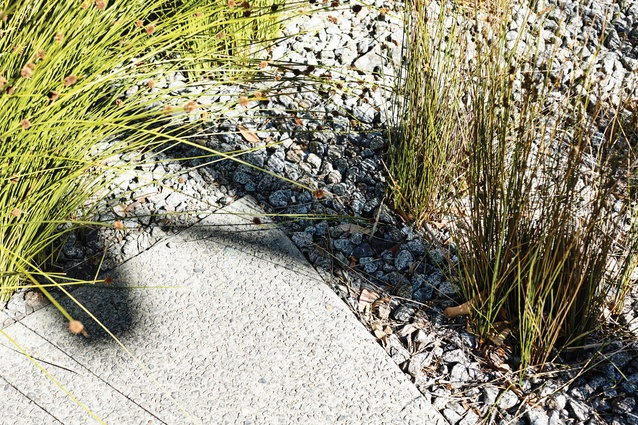 Tufts of <i>Ficinia nodosa</i> punctuate a surface of crushed stone in the rain garden.