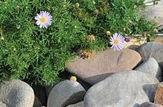 Landscaping for Bushfire: Garden Design and Plant Selection