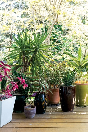 Plants: There's only so much space in their lives when it comes to care and attention, so when it comes to room-mates, plants are perfect.