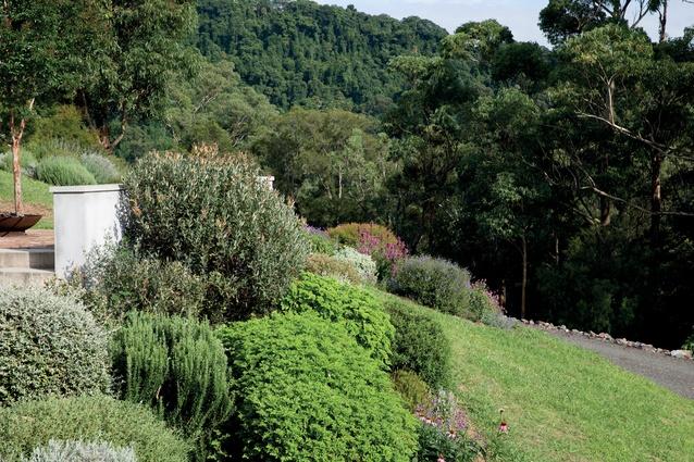 Rosmarinus spp, Echinacea spp, Pelargonium spp, Nepata spp, Salvia spp.