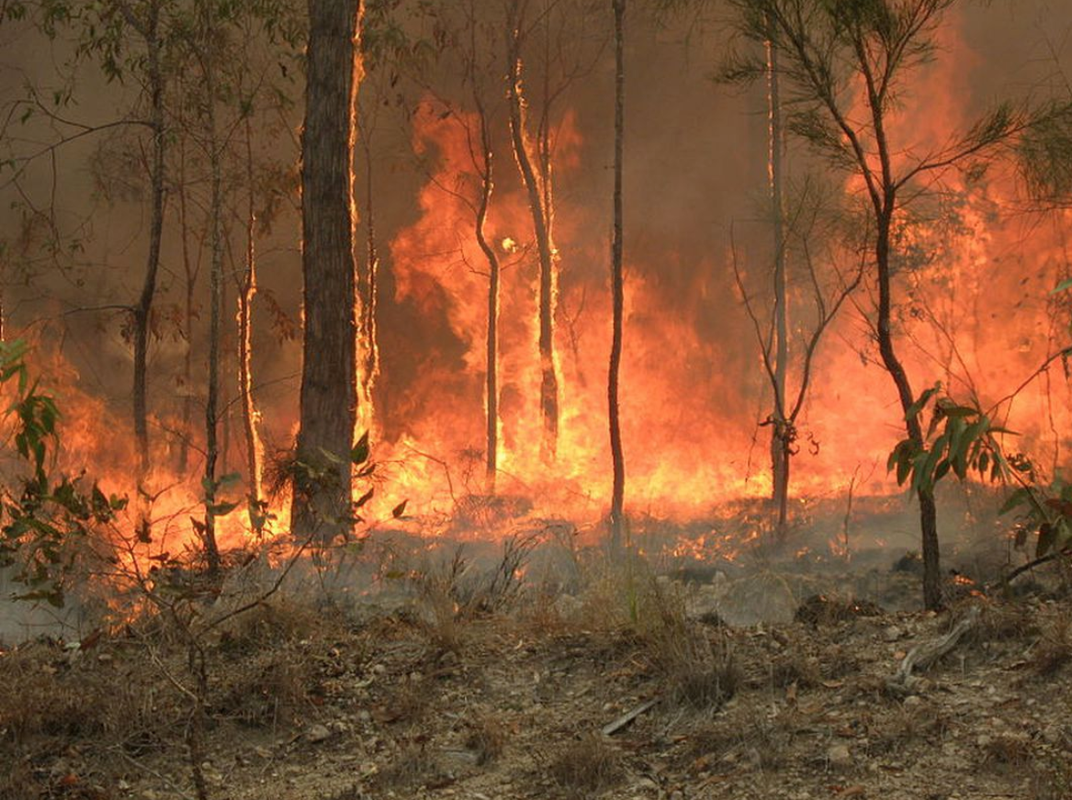 Climate change is contributing to increasing bushfire risk, with recent fires affecting rainforest in Queensland.