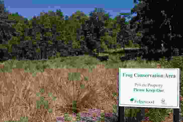 Frog conservation area, Edgewood Estate.