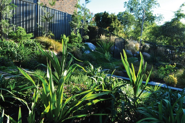 The front section of the garden hosts largely indigenous plantings, with the addition of <i>Doryanthes excelsa</i> (gymea lily), and extends to include the nature strip.