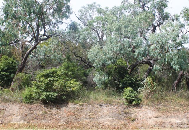 In the Melbourne suburb of Lysterfield, a mesic shift from degraded fire-prone sclerophyll forest to dry rainforest, less vulnerable to bushfires, has been taking place