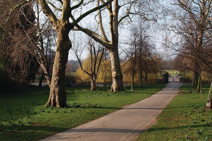 A naturalistic path through a London Park.