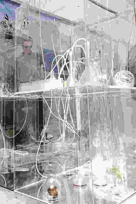 A transparent mesh structure encases the scientific vitrine.
