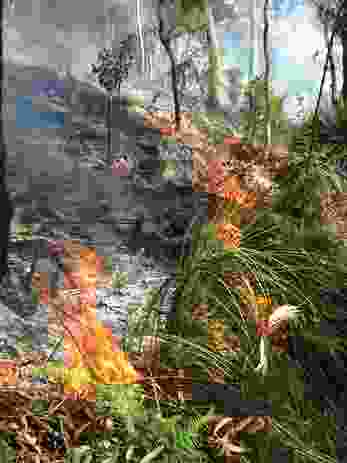While low-intensity ecological burn is an effective tool for biodiversity restoration, severe bushfire can push an ecosystem over a threshold where recovery becomes impossible.