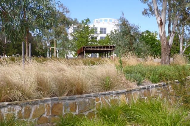 Native planting in the campus park include new River Gums grown from site-sourced seed and compliment the picnic shelter constructed of recycled hardwood.