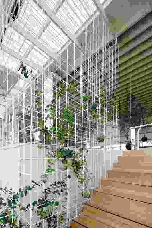Honeysuckle grows through the steel cage facade of the Loft.