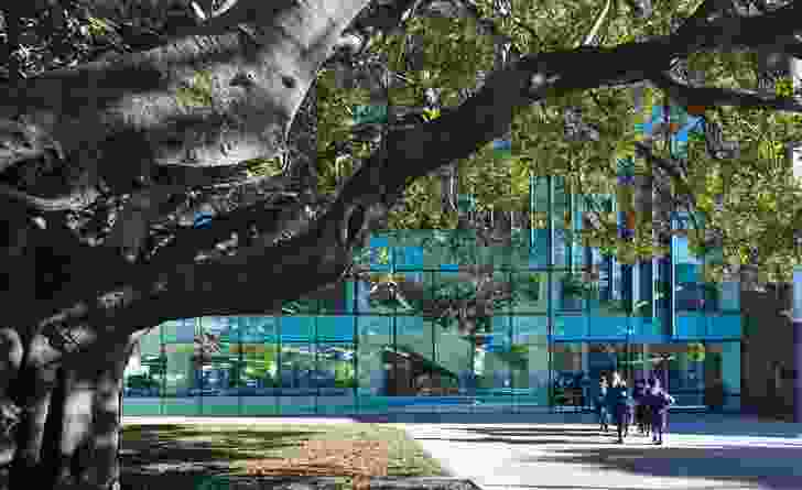 Maintaining a relationship between the building and the site's 100-year-old moreton bay fig was crucial to the design.