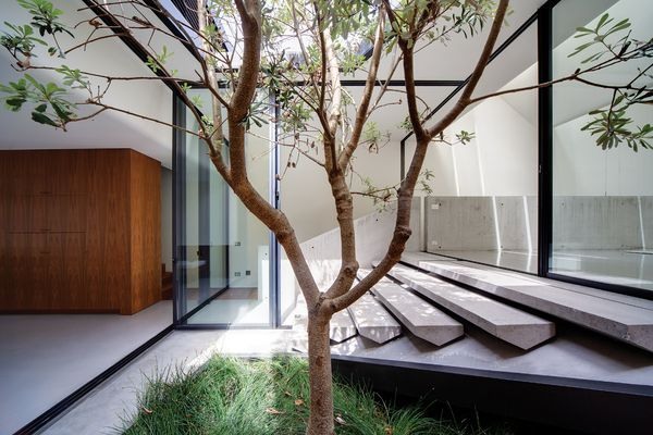 A central courtyard on the first floor divides the two volumes of the terrace, with the roof cut out around a silvery green banksia integrifolia.