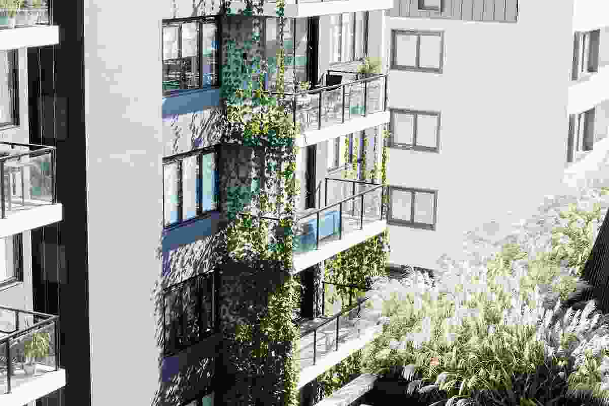 Vines clamber five storeys up the building's facade, softening its mass and providing seasonal microclimactic control.