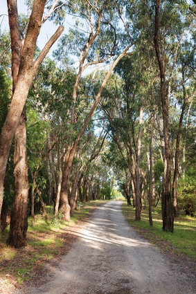 The driveway winds through a patch of eucalyptus woodland to arrive at the grassed clearing within which the house sits.