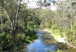 The Yarra River upstream at Pound Bend.