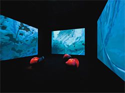 The black cube for video and other media works. Artworks by Patricia Piccinini: Lustre, 1999 (projection on walls) and Car Nuggets, They're good for you, 1998 (three red nuggets). Image: Dianna Snape