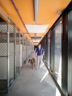 Corridor in one of the kennel wings.