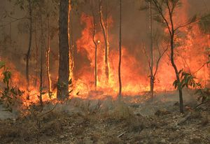 Research shows that climate change is contributing to increasing bushfire risk.