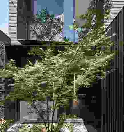 A courtyard has been planted to become a lush green space with views of the sky.