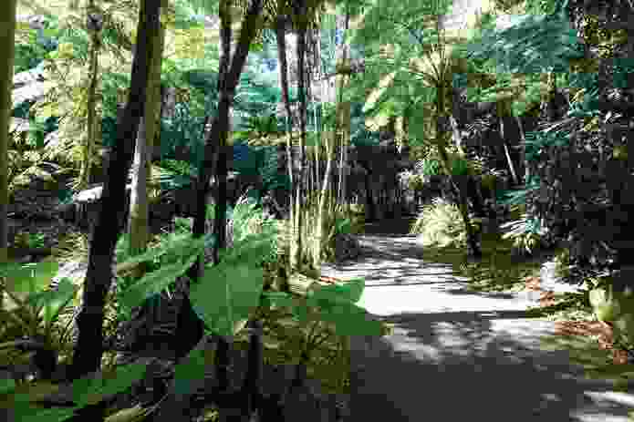 Fern gully features a shaded walking track, which runs alongside a creek.