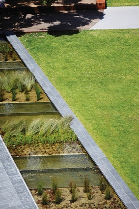 A wide variety of aquatic plants have been used in the water feature – a nod to Monash University's research on water-sensitive cities as well as the original wetlands.