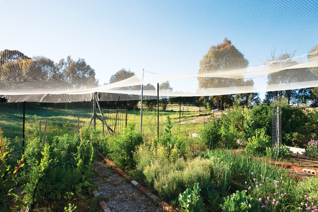 The kitchen garden is draped in netting.