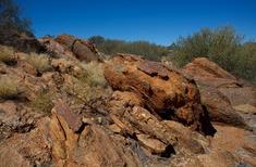 Olive Pink Botanic Garden: Celebrating Central Australia's arid zone flora