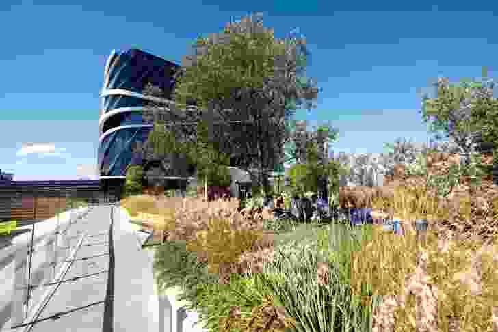 The Rush\Wright Associates-designed roof terraces at the Victorian Comprehensive Cancer Centre are planted with a mix of succulents and grasses under mature olive and bottle trees.