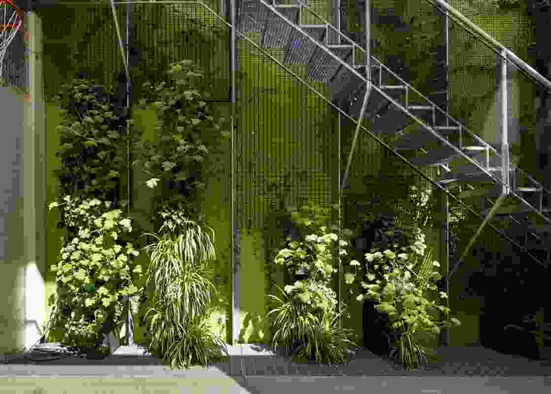 The design of the vertical garden is the result of a collaboration with Eckersley Garden Architecture.