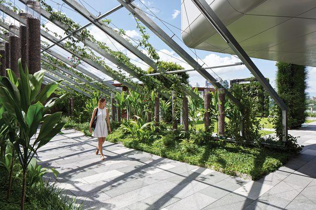 Lady Cilento Children S Hospital Landscapes Architectureau