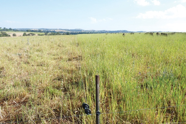 The conditions on the left of the temporary electric fence are typical of land that has had enough grazing, according to grazier David Marsh.