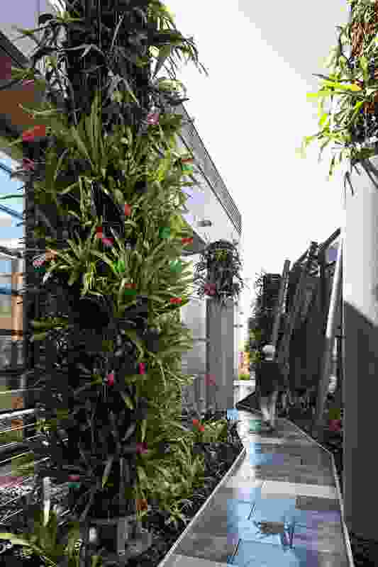 A colourful variety of bromeliads grows from vertical columns.