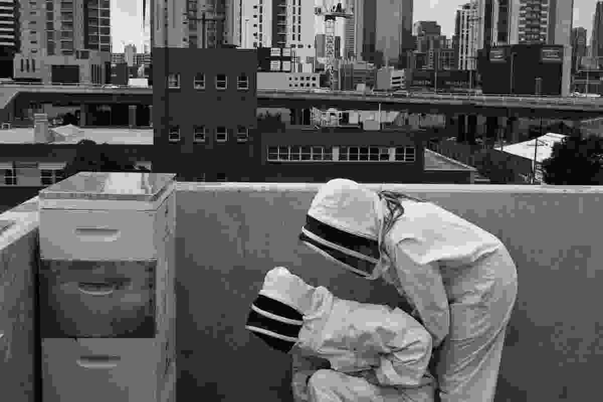 Mat and Vanessa Inspect the rooftop hives in Melbourne.