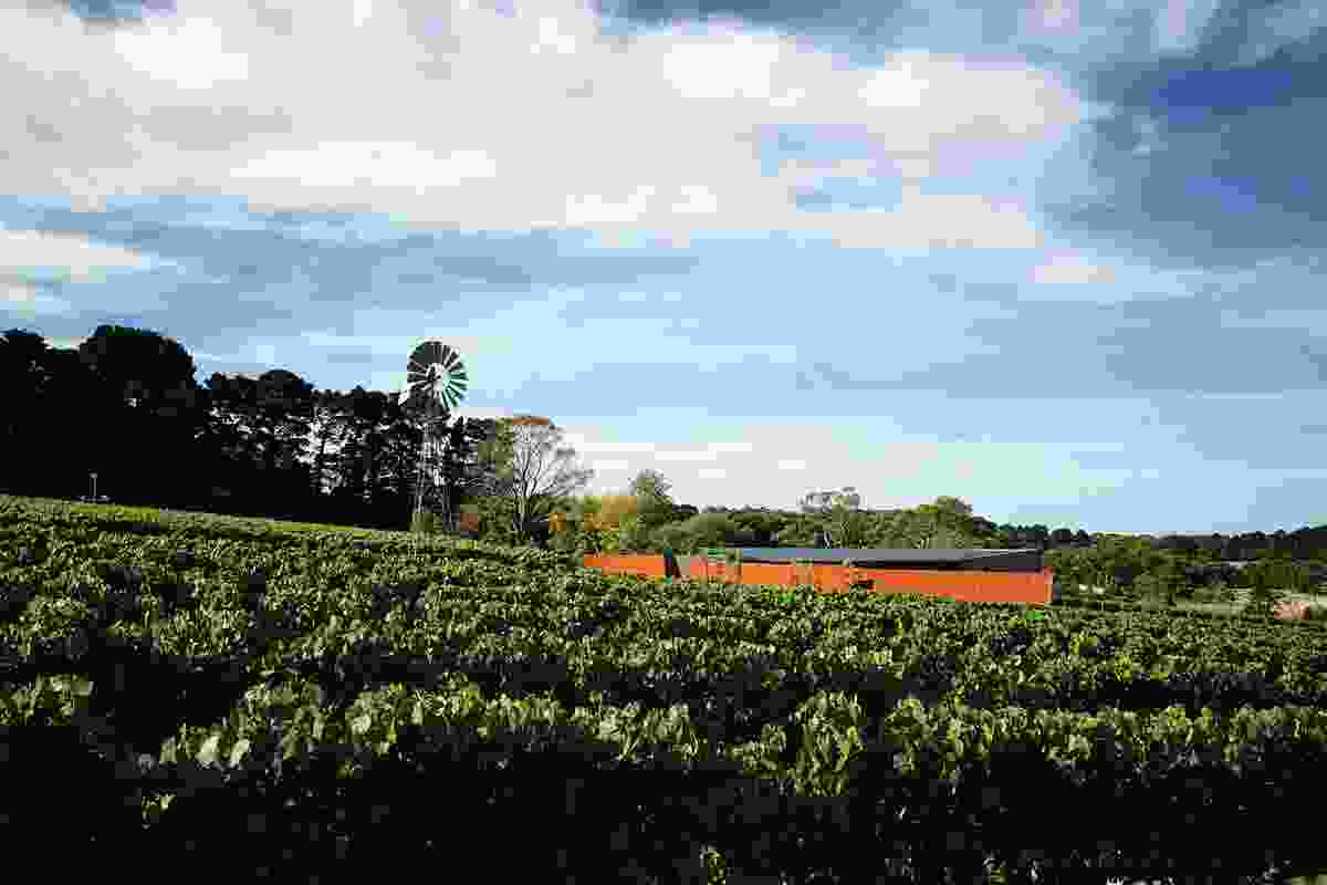 The house is nestled in a vineyard on Victoria's Mornington Peninsula.