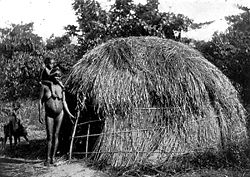 Dyirbal language group blady grass dome (midja) constructed for rainy and windy weather, Tully River c.1901.