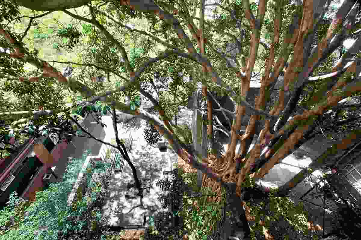 Sector 7. Arboreal view of the Fig Tree courtyard.