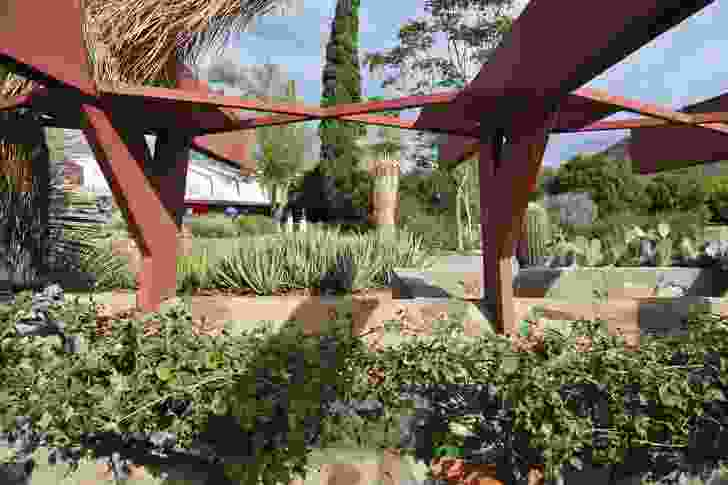A diverse array of local natives and exotic plants are placed as highlights at Taliesin West in Arizona, USA.