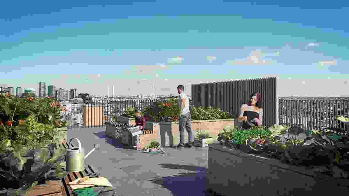 The communal productive rooftop garden in the proposed Hawke and King apartments by Six Degrees.