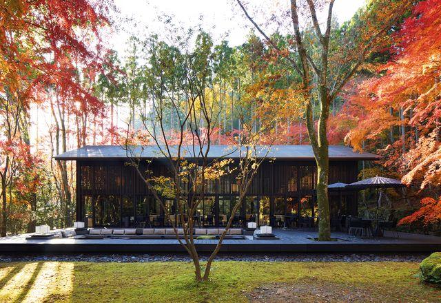 阿曼京都的建筑在视觉上是简单和极简主义的,让自然和景观主导。生活馆形成了该物业的社交中心,并通向一个带有下沉式火坑的大型木材餐厅露台。