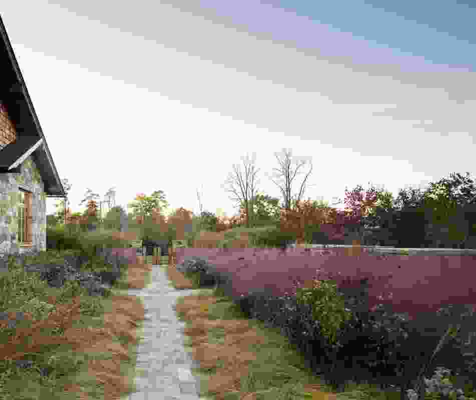 Native Meadow, Virginia by Nelson Byrd Woltz Landscape Architects. ‎Muhlenbergia capillaris (pink muhly grass), creates a pink wash across the horizon when it's in bloom.