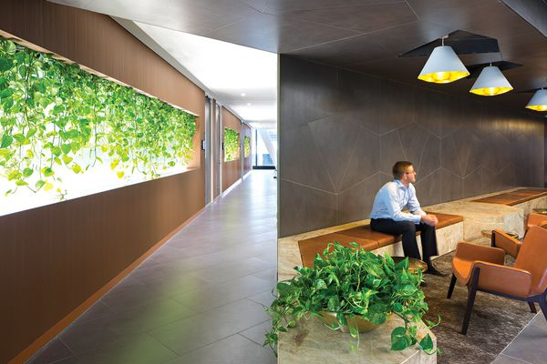 Plants are strategically used within a warm palette of timber, stone and leather.