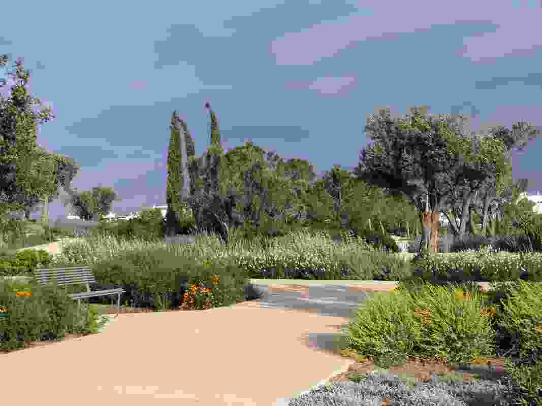 The mediterrean garden is gridded with porous gravel paths; beds between the paths are punctuated by old olive trees and cypress pines.