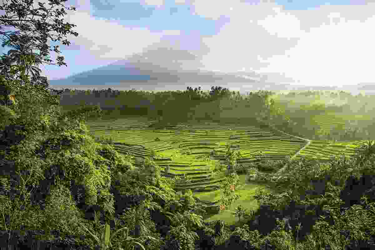 On the island of Bali, Indonesia, the Mahagiri rice terraces form part of a unique 1,000 year-old agrarian system known as the subak.