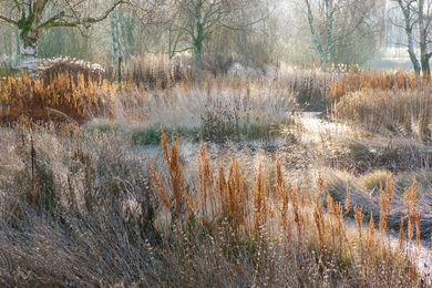 Plantings designed by Piet Oudolf at Pensthorpe Nature Reserve in winter.