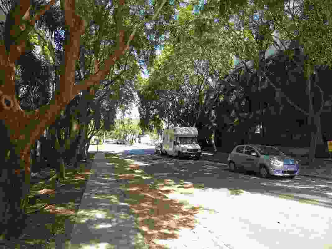 Shepherd Street in central Darwin is a well-shaded avenue with complete canopy cover.
