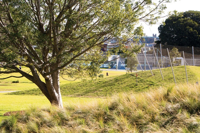 """The planting treatment on the """"green roof"""" of the new pool building features indigenous grasses."""