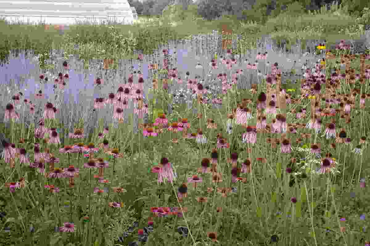 Wisley Garden in Surrey, England, by Piet Oudolf.