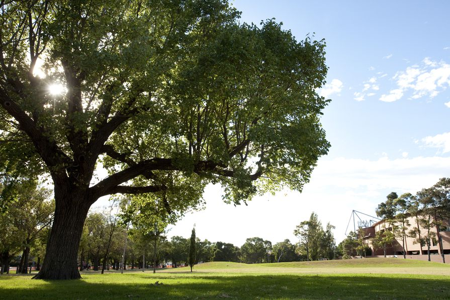 Melbourne's trees have become the recipients of thousands of love letters sent from admirers around the globe.