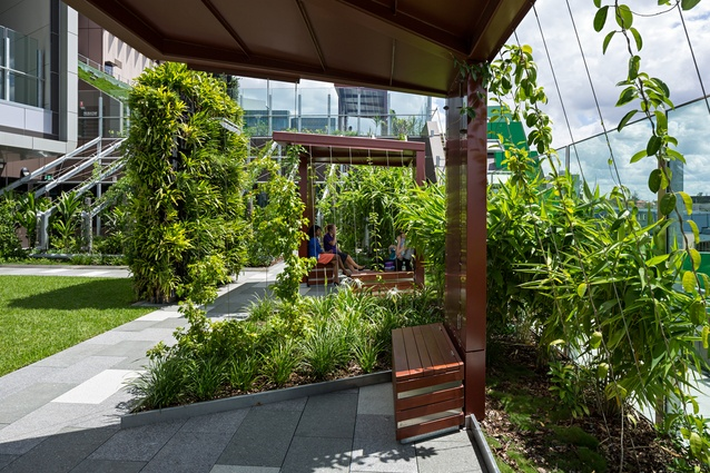 """Bench seats in the Lady Cilento Children's Hospital """"secret garden"""" are surrounded by lush tropical vegetation."""