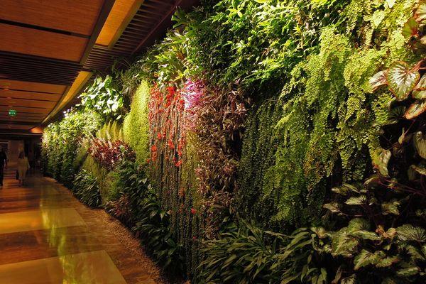 Patrick Blanc's 2013 vertcial garden at the Sofitel Palm Jumeirah, Dubai.